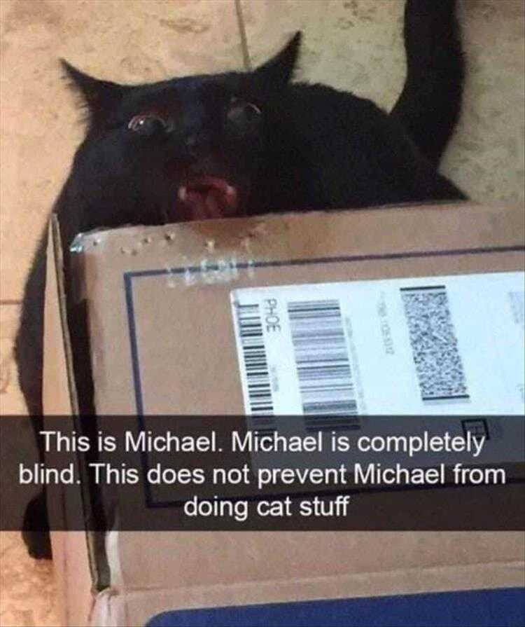 Hysterical Animal Pictures With Captions  Sensing Cardboard