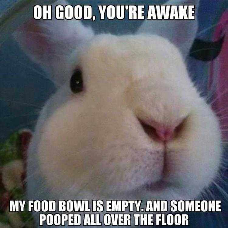 Hysterical Animal Pictures With Captions  Emergency
