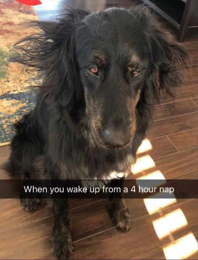 Hysterical Animal Pictures With Captions  Overlapped