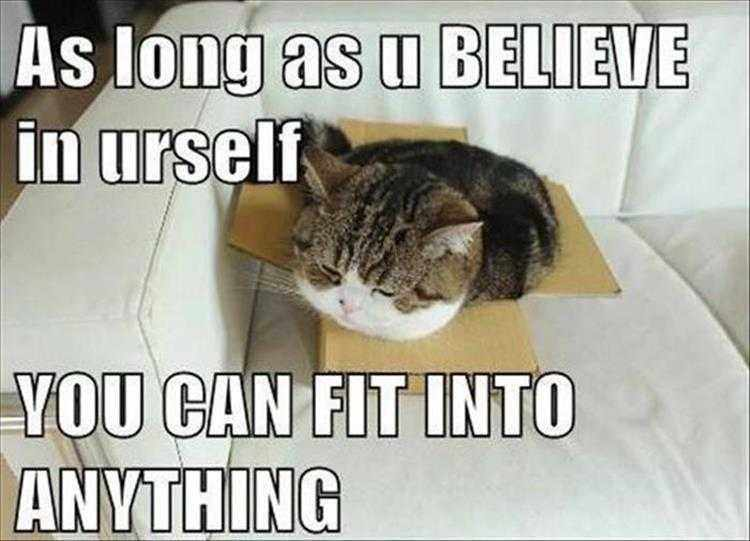 Hysterical Animal Pictures With Captions  Inspirational Quotes Illustrated