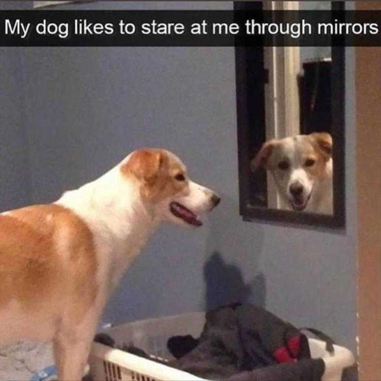 Hysterical Animal Pictures With Captions  Neat Trick