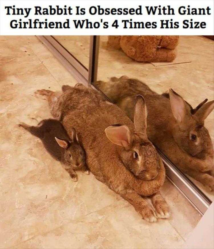 Hysterical Animal Pictures With Captions  Big Girls