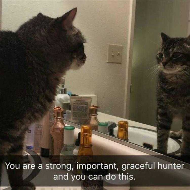 Hysterical Animal Pictures With Captions  Motivational Quotes