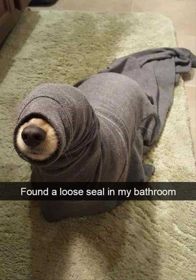 Hysterical Animal Pictures With Captions  Land Seal