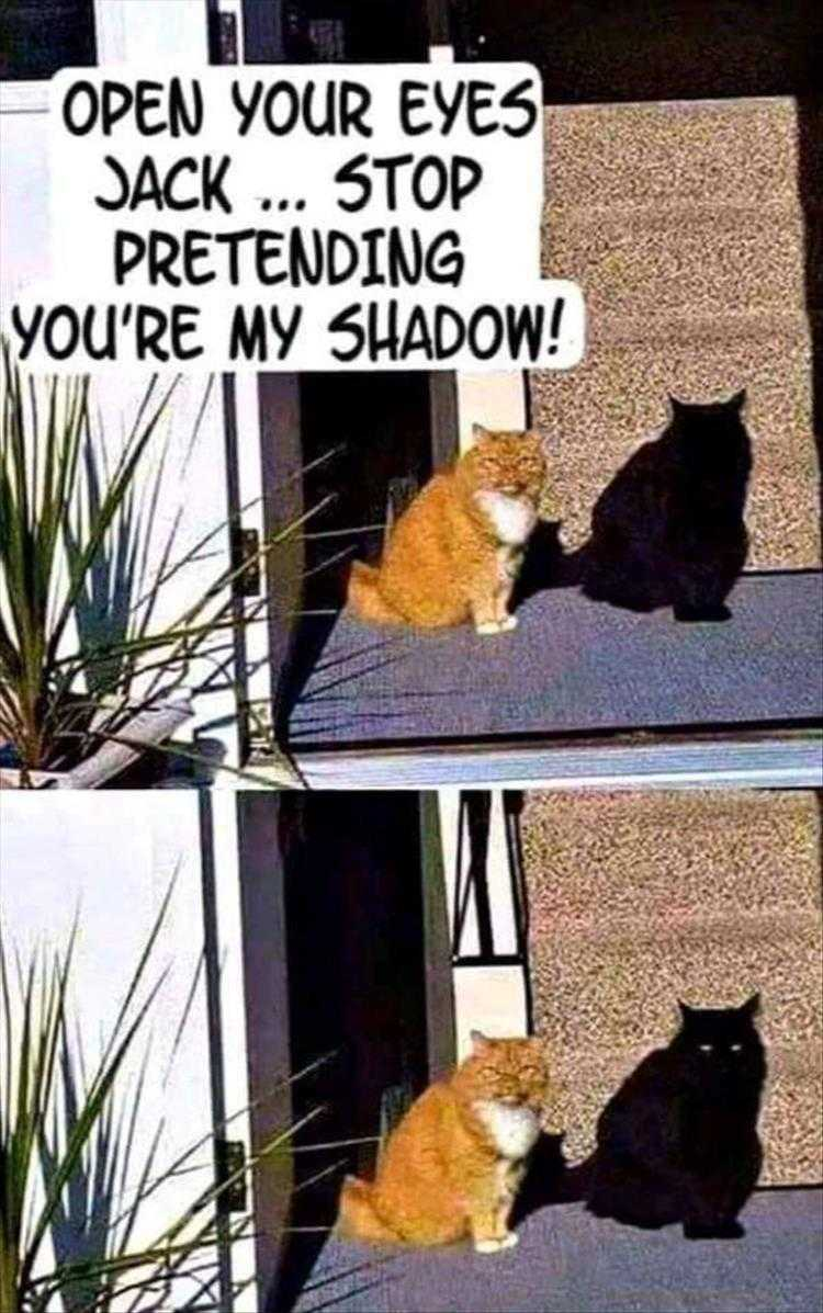 Hysterical Animal Pictures With Captions  The Art Of Stealth