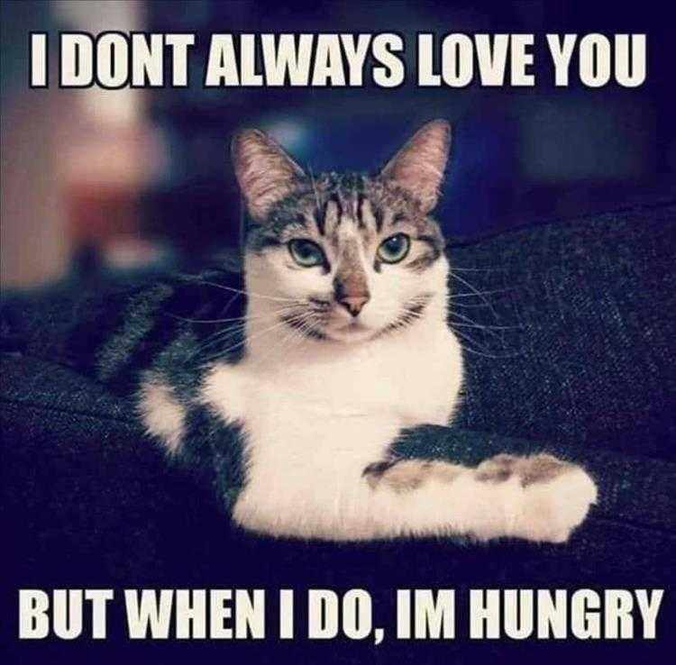 Hysterical Animal Pictures With Captions  Conditional Love