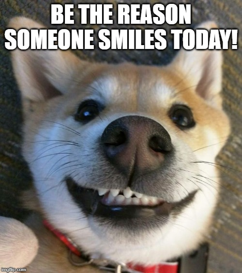 15 Of The Cutest Smiling Dog Pictures You Must See