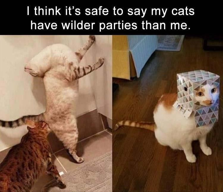 20 Hilarious Pet Memes For Animal Lovers
