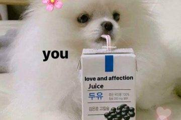 22 Cute And Wholesome Memes To Share With Friends