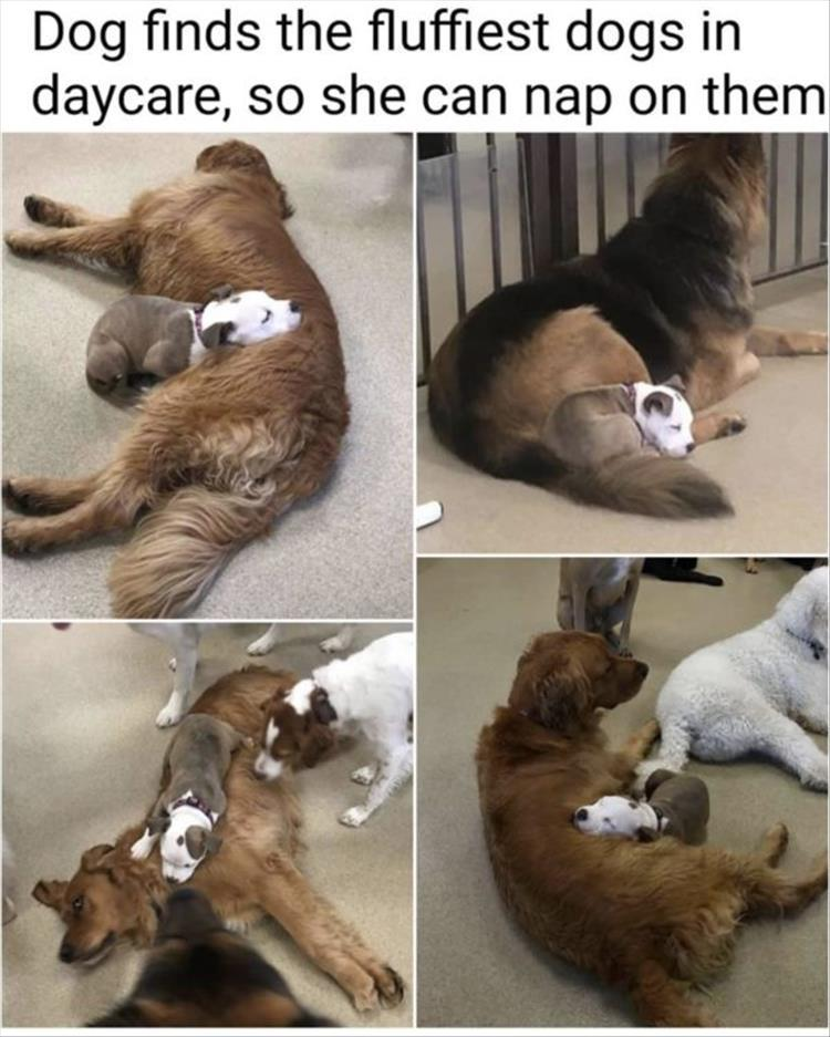 20 Cute And Funny Animal Memes You Must See