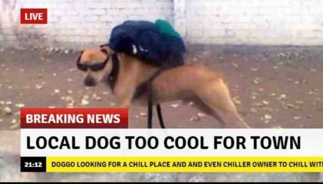 15 Funny News Memes That Will Leave You Scratching Your Head