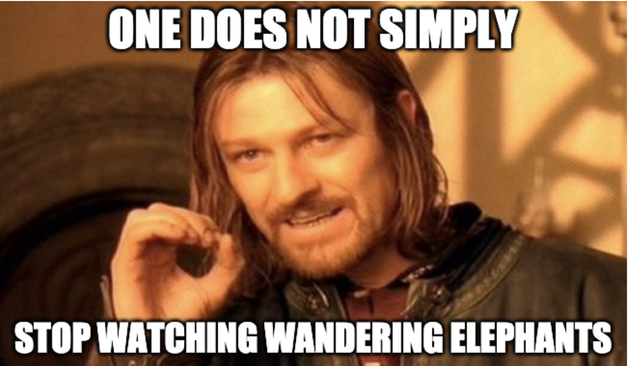 Chinese Can'T Stop Watching Wandering Elephants Meme