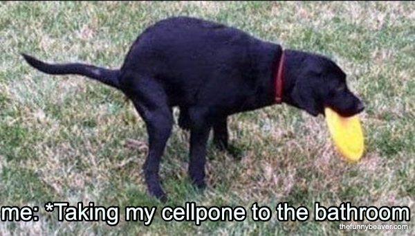 Me: *Taking My Cellpone To The Bathroom