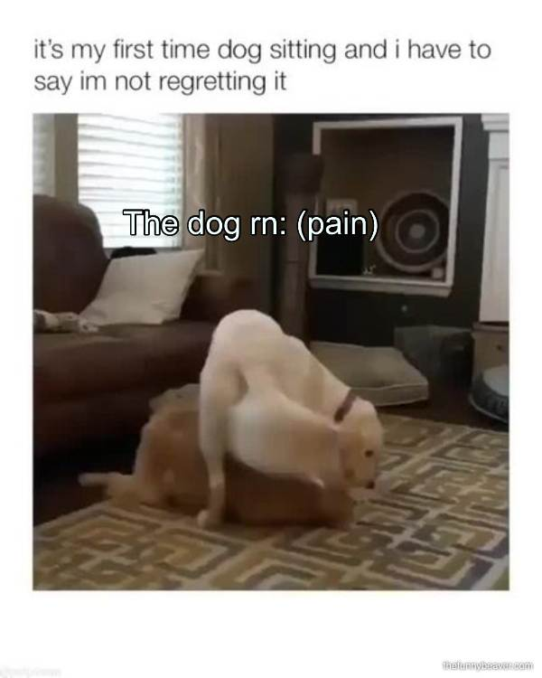 The Dog Rn: (Pain)